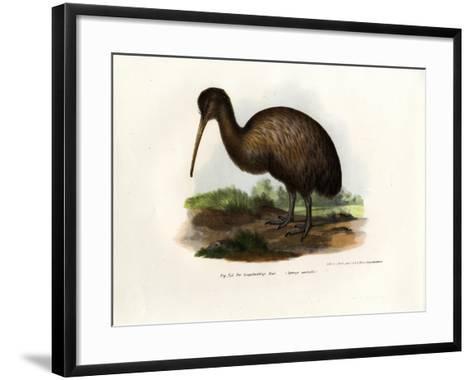 Kiwi, 1864--Framed Art Print