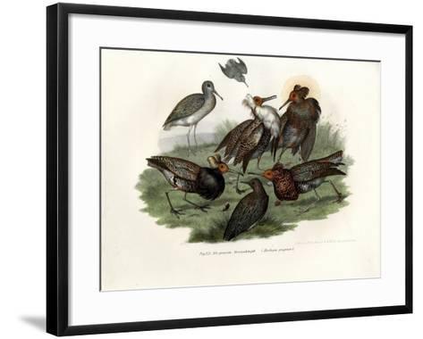 Ruff, 1864--Framed Art Print