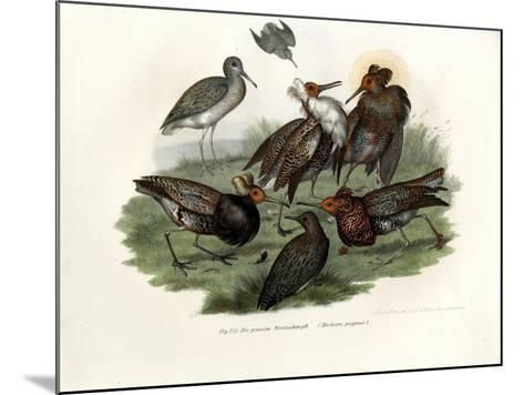 Ruff, 1864--Mounted Giclee Print