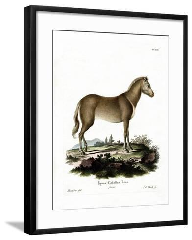Wild Horse--Framed Art Print