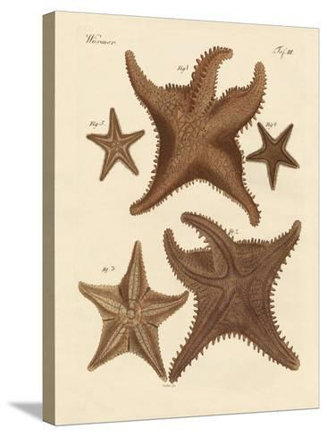 Starfish--Stretched Canvas Print