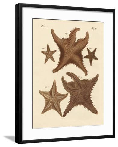 Starfish--Framed Art Print