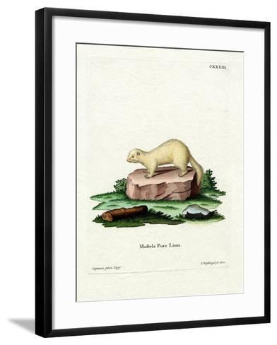 Ferret--Framed Art Print