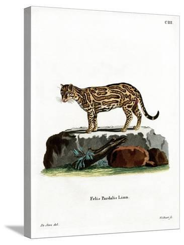 Ocelot--Stretched Canvas Print