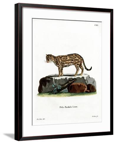 Ocelot--Framed Art Print