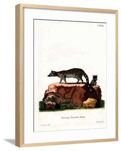 Common Genet--Framed Art Print