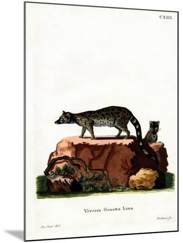 Common Genet--Mounted Giclee Print