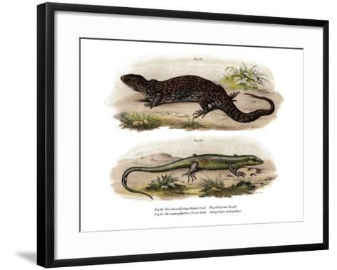 Tree Skink--Framed Art Print
