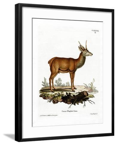 Red Deer--Framed Art Print