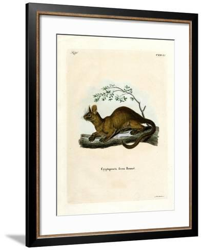 Fossa--Framed Art Print