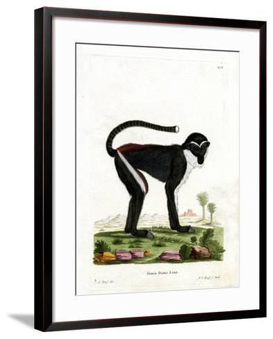 Diana Monkey--Framed Art Print