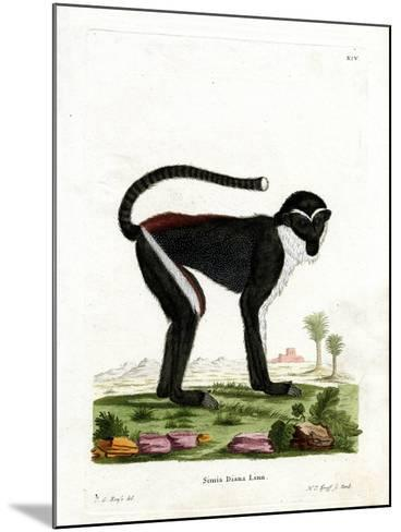 Diana Monkey--Mounted Giclee Print