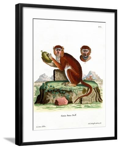 Patas Monkey--Framed Art Print
