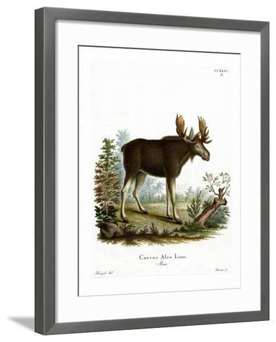 Moose--Framed Art Print