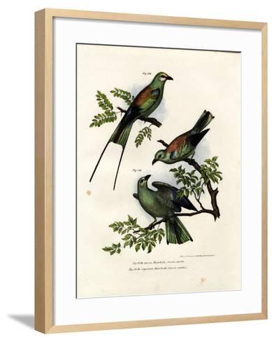 Roller, 1864--Framed Art Print
