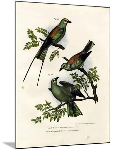 Roller, 1864--Mounted Giclee Print