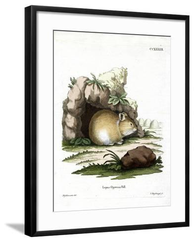 Daurian Pika--Framed Art Print