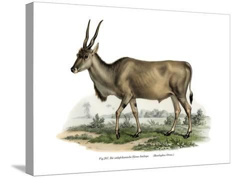 Eland, 1860--Stretched Canvas Print