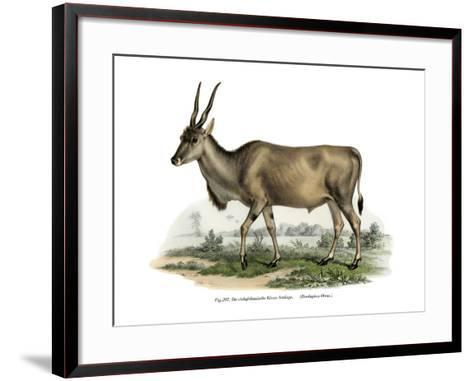 Eland, 1860--Framed Art Print