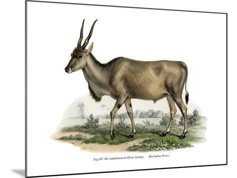 Eland, 1860--Mounted Giclee Print