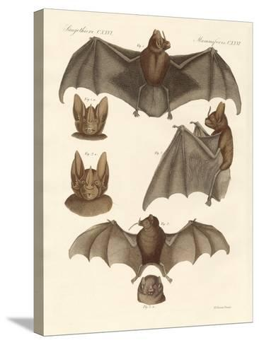 New Bats--Stretched Canvas Print