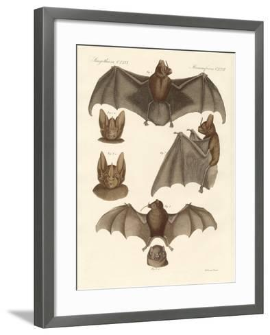 New Bats--Framed Art Print