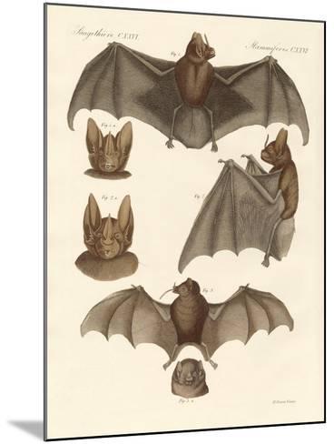 New Bats--Mounted Giclee Print