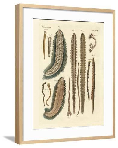 Seaworms--Framed Art Print