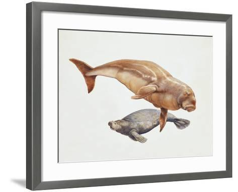 Close-Up of a Sea Cow (Trichechus Manatus) and a Dugong (Dugong Dugon)--Framed Art Print