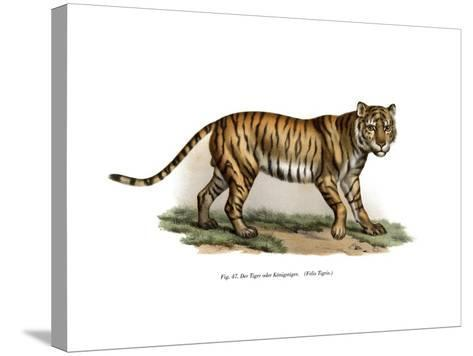 Tiger, 1860--Stretched Canvas Print