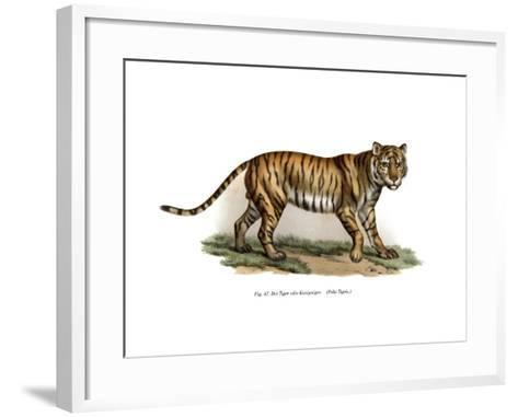 Tiger, 1860--Framed Art Print