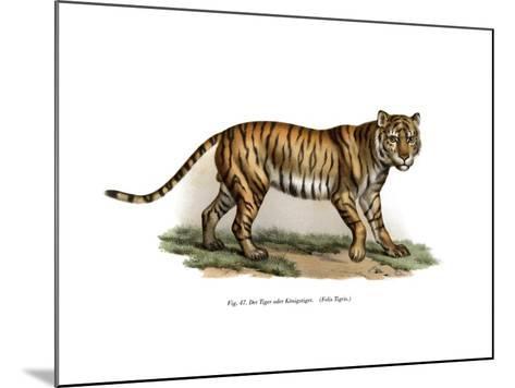 Tiger, 1860--Mounted Giclee Print