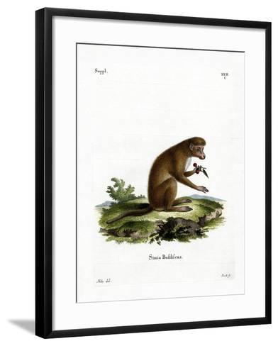 Macaque--Framed Art Print