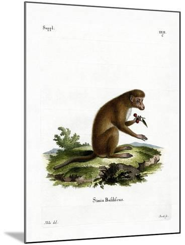 Macaque--Mounted Giclee Print