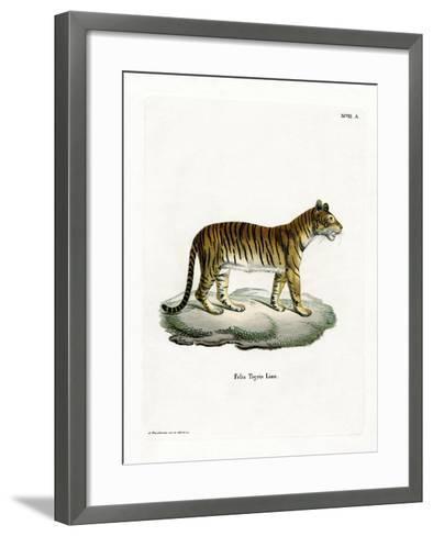 Tiger--Framed Art Print