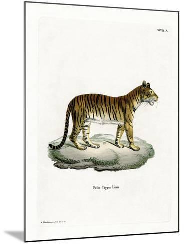 Tiger--Mounted Giclee Print
