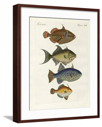 Foreign Fish--Framed Art Print