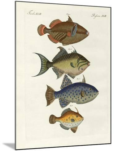 Foreign Fish--Mounted Giclee Print