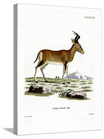 Hartebeest--Stretched Canvas Print