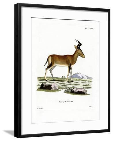 Hartebeest--Framed Art Print