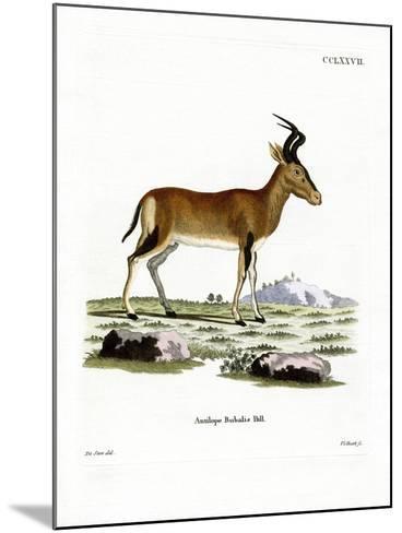 Hartebeest--Mounted Giclee Print