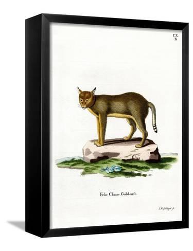 Jungle Cat--Framed Canvas Print