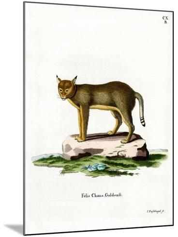 Jungle Cat--Mounted Giclee Print