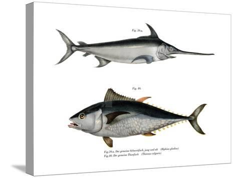 Tuna--Stretched Canvas Print