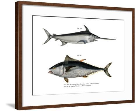Tuna--Framed Art Print