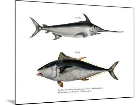 Tuna--Mounted Giclee Print
