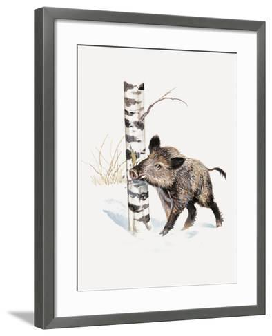 Close-Up of a Wild Boar Rubbing His Neck on a Tree Trunk (Sus Scrofa)--Framed Art Print