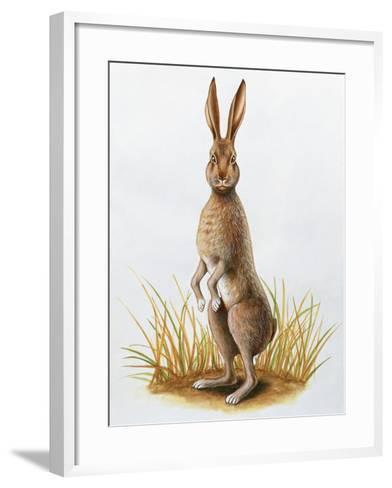 Close-Up of an European Hare Standing in Tall Grass (Lepus Europaeus)--Framed Art Print