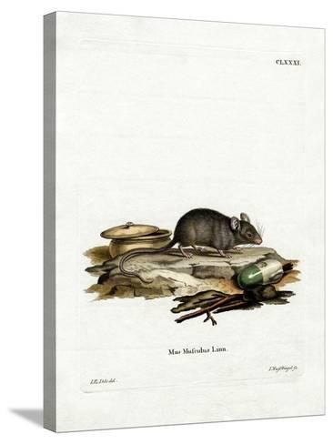 House Mouse--Stretched Canvas Print