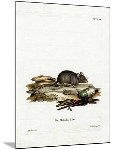 House Mouse--Mounted Giclee Print